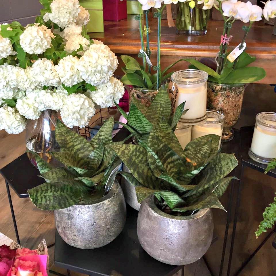 Beach Road Florist plants